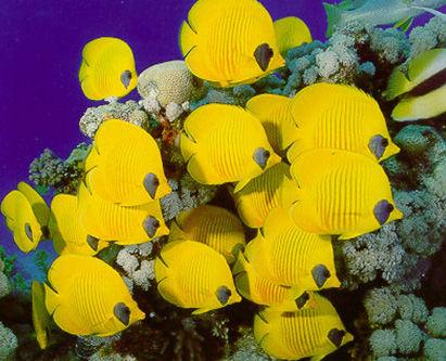 Fishbowl datant en ligne