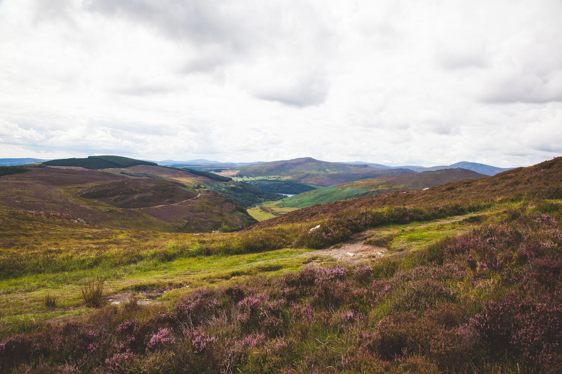 Excursion dans les Montagnes de Wicklow